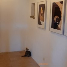 Tris mascotte felina nella sala espositiva