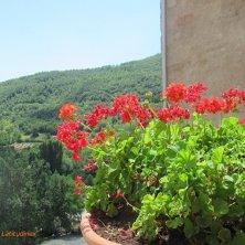 gerani e panorama al Castello di Postignano