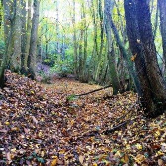 bosco a Monterano