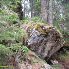 roccia e radici nel bosco