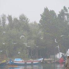 gabbiani e pescatori Torcello laguna di Venezia