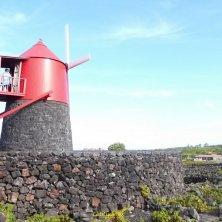 Pico Azzorre vini portoghesi