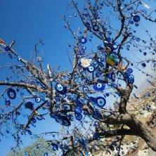 albero scaccia sfortuna