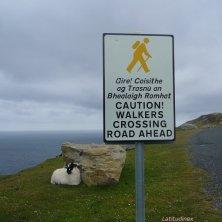 scogliere Slieve League cartello e pecora Donegal