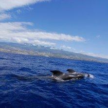 balene a Tenerife costa