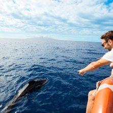 in barca avvistamento balene a Tenerife