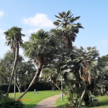 palme al laghetto