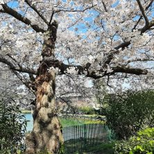 primavera al laghetto