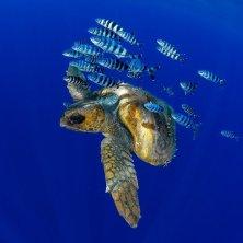tartaruga e pesci Cetàceos fotografia Francis Perez
