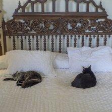 gatti di Hemingway sul lettone