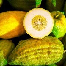 frutti del cedro
