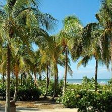 palme a Key West