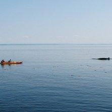 balene Quebec