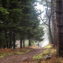 trekking bosco di Napoleone all'Elba
