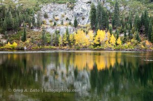 Thompson Lake Aspens (2010)