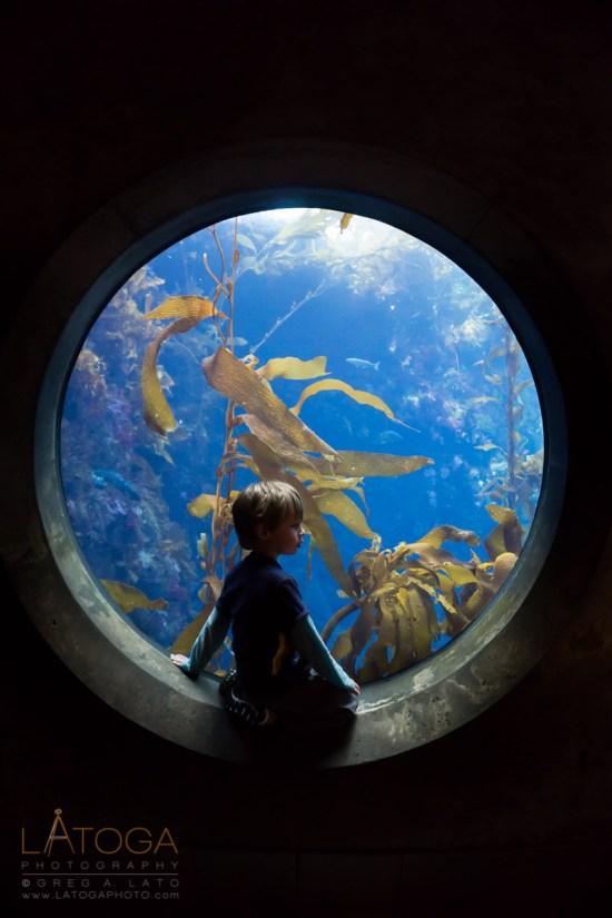 Boy Entranced by Sea Life