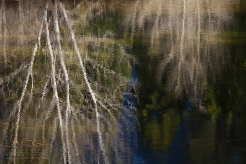 Dogwood Reflections in Merced River