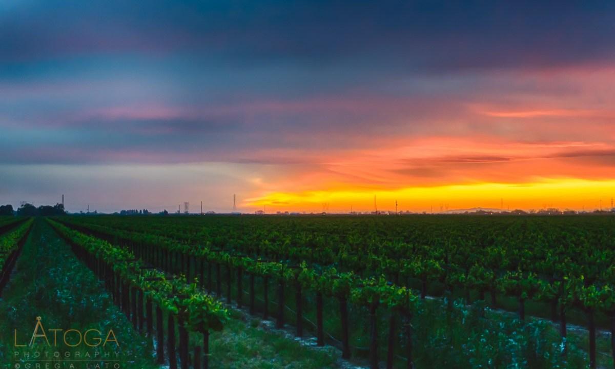 Painterly Sunset over Lodi Vineyard
