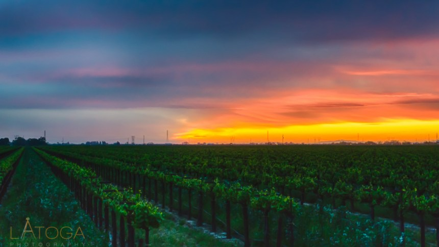 Painterly Sunset over Lodi Vineyard