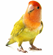 giving the parrot the last word - Why is it called Animal Biomechanical Medicine?
