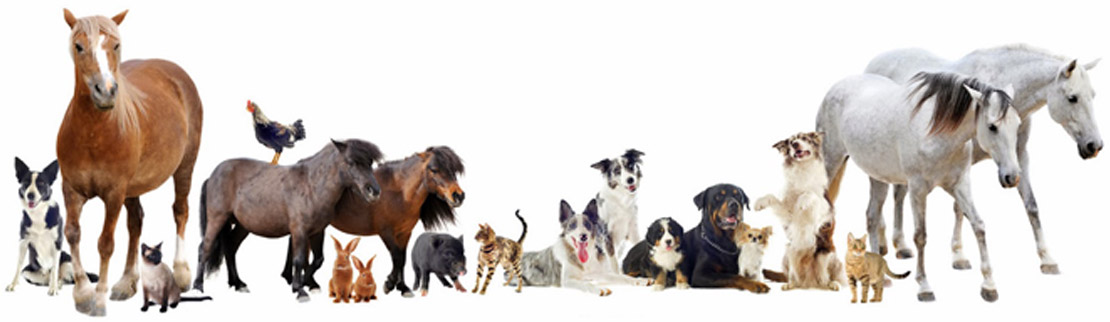 latrobe vet group treat a wide variety of animals - We are Latrobe Veterinary Group - Welcome!