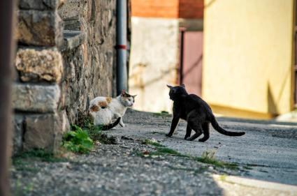 photo 1528286968754 dec95df6f170 1024x680 - Cat fights