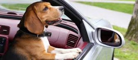 car - Car Sickness in dogs