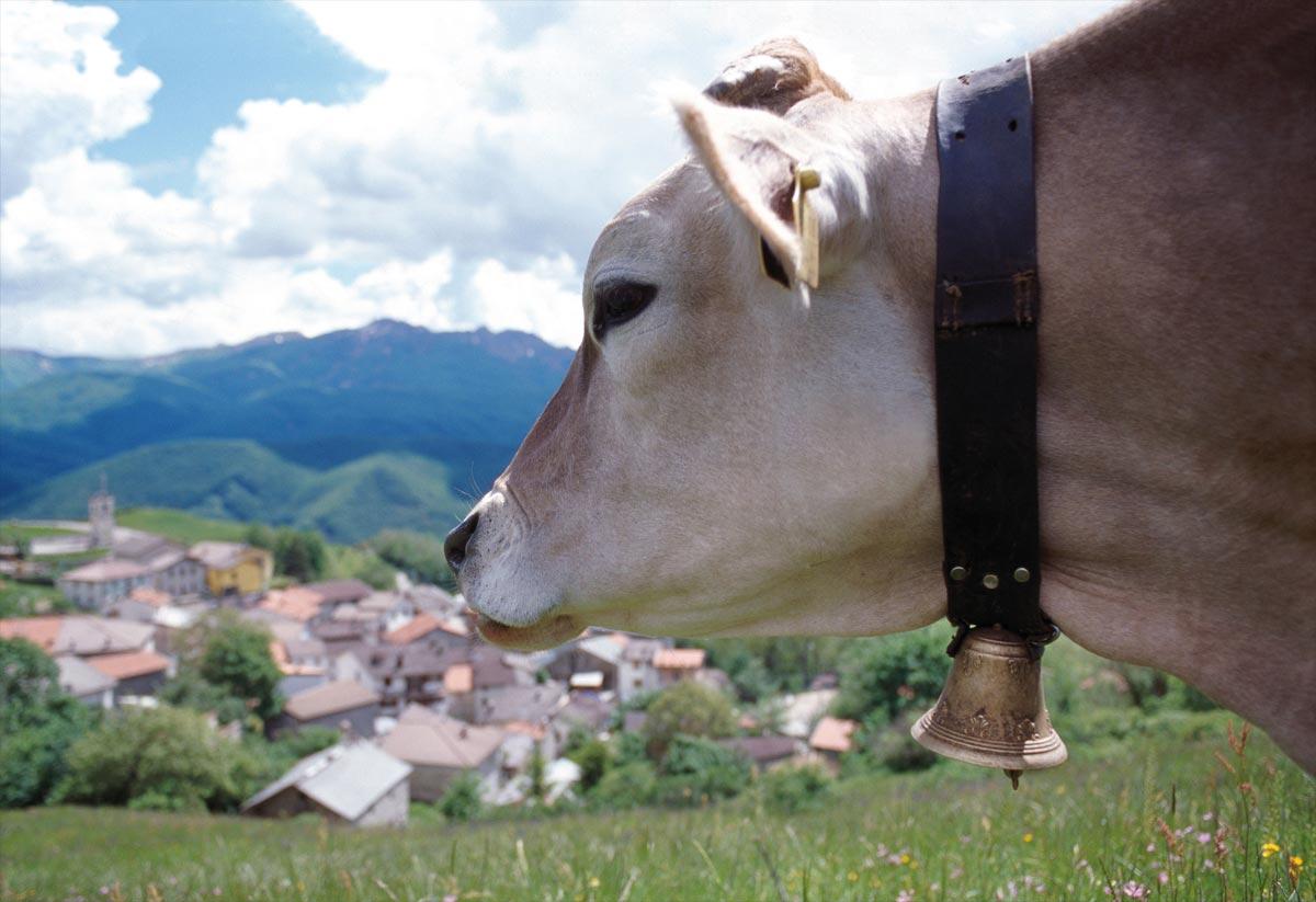 Caseifici Aperti 2017, scopri come nasce il Parmigiano Reggiano