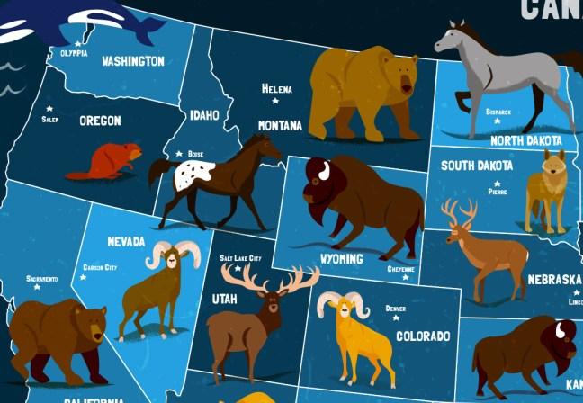 usa animals map illustrated by jennifer farley