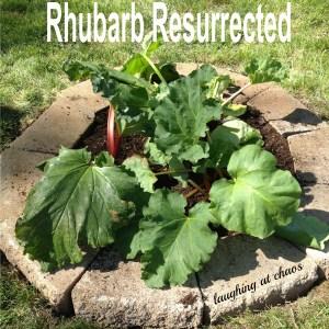 rhubarb resurrected