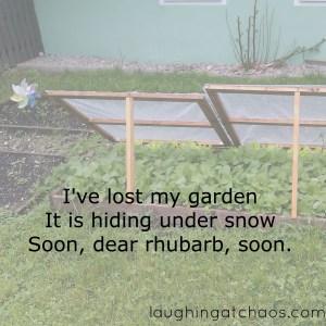 rhubarb haiku