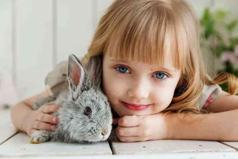 Animal knock knock jokes for kids
