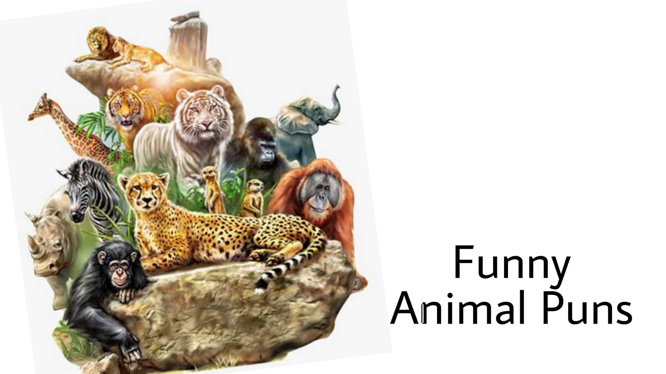 funniest animal puns