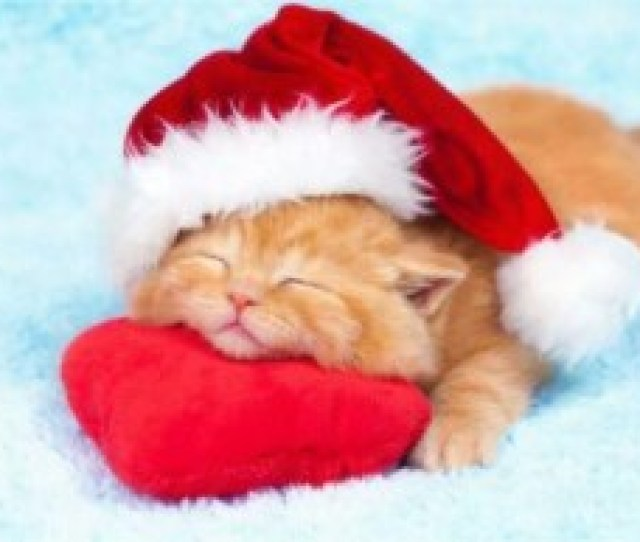 Funny Christmas Cute Kitten With Santa Hat