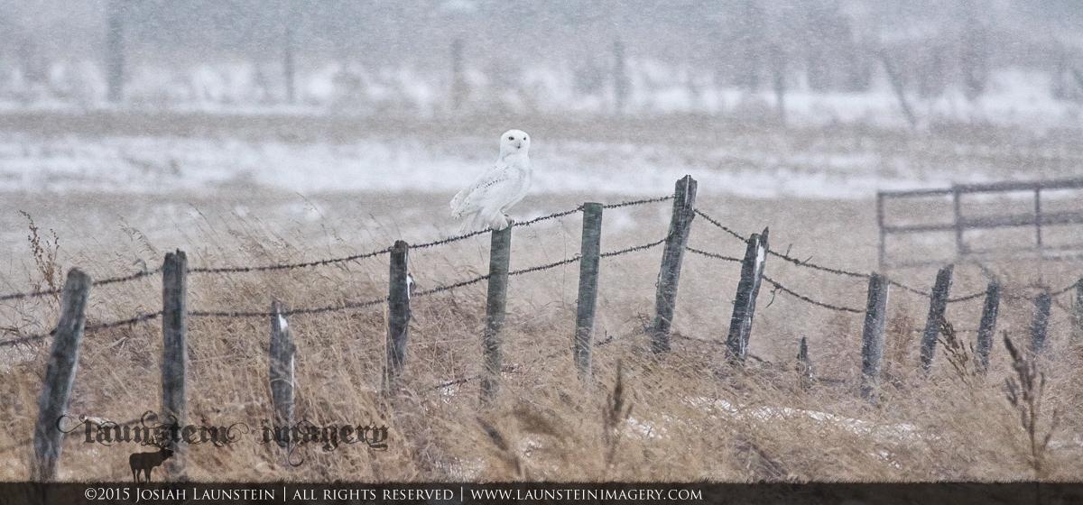 Snowy Snowy | © Copyright 2015 Josiah Launstein | www.launsteinimagery.com