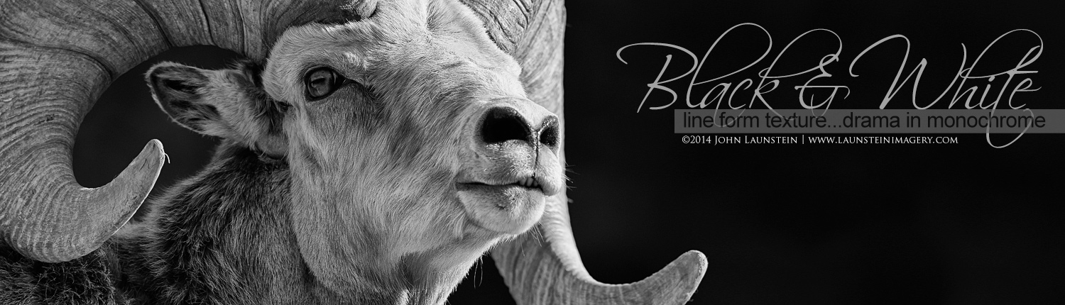 Black and White Wildlife Images by the Launstein Family