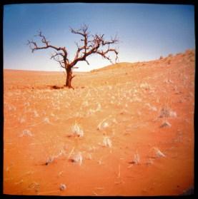 desert-tree.jpg
