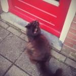 De kat van de buren