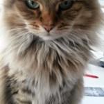 Onverwachte nadelen van het hebben van een kat