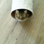 Ik ben geen echt kattenvrouwtje, scusi