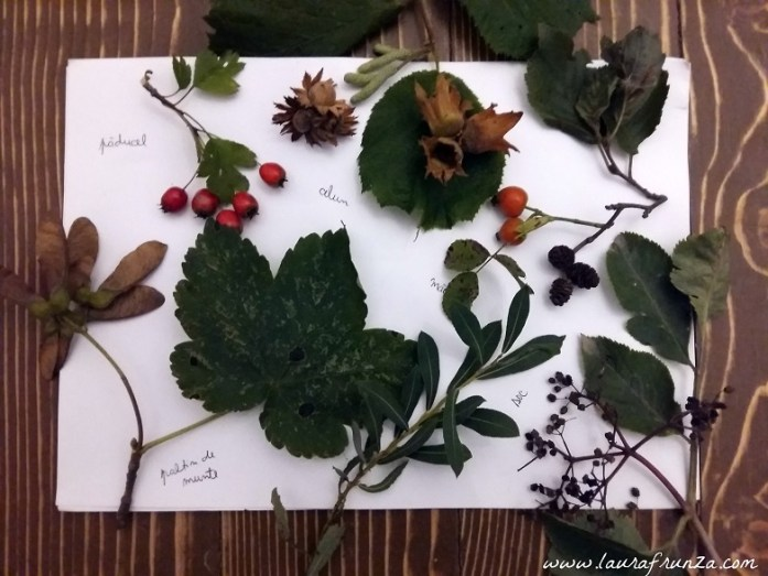 lectie-de-botanica-autumnala