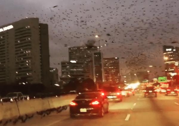 aves Houston