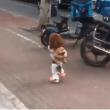 perros que caminan en dos patas