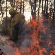 incendio forestal tepoztlan
