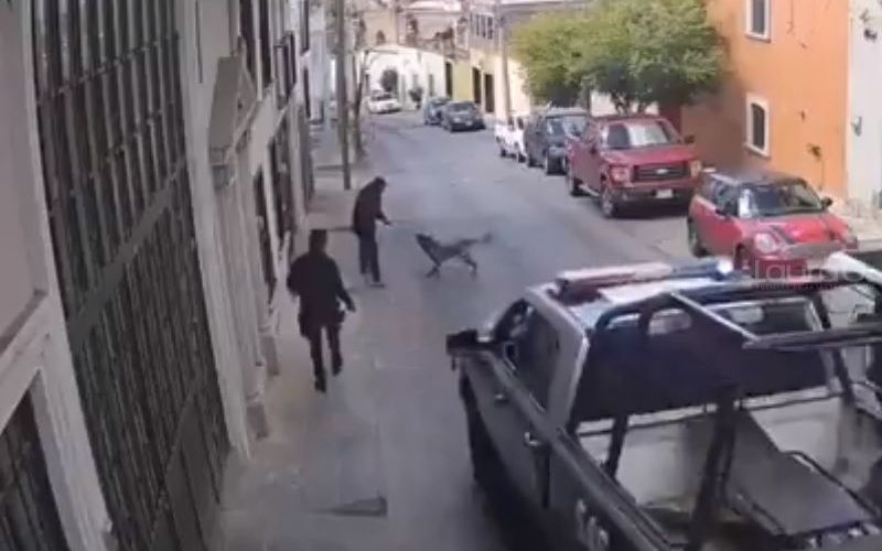 perro-policia