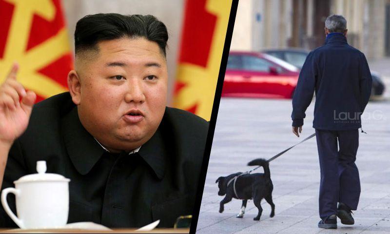 perros corea