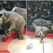 elefantes-circo-rusia