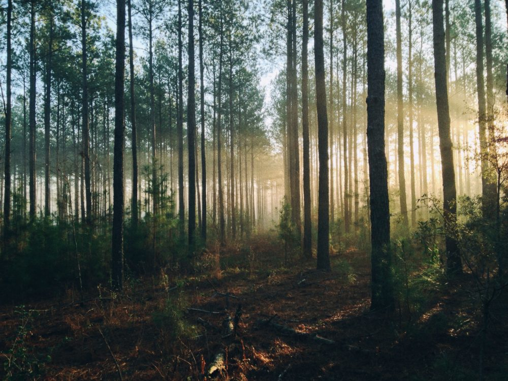 Laura Henderson Counseling – Woods with sun shining through