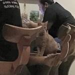 Cat sitting at the bar