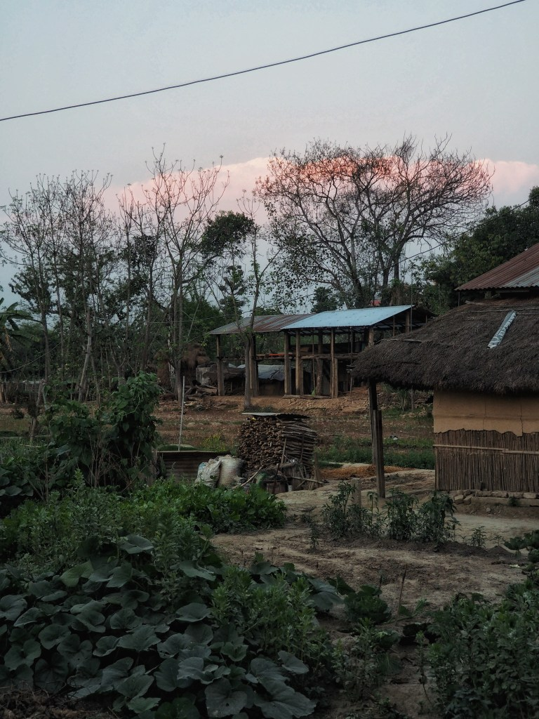 Sauraha, tradition, living, culture, Nepal, Chitwan, nationalpark, hut, nature, rural, houses, vegetables, nature, agriculture, backyard